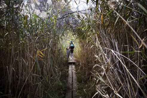 Rear view of hiker walking on narrow boardwalk amidst plants - CAVF15013