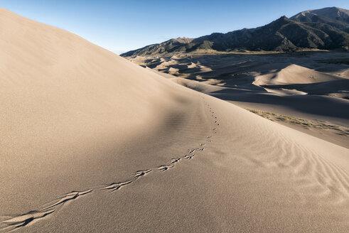 Animal print on sand dunes - CAVF15145