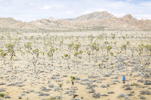 High angle view of hiker walking on field at Joshua Tree National Park during sunny day - CAVF15322