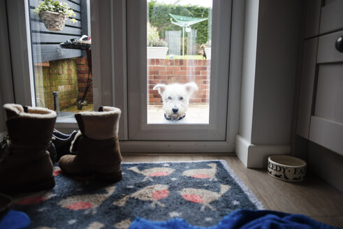 Portrait of dog seen through door window - CAVF15723