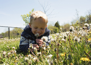 Happy boy holding dandelion flower growing on field against sky during sunny day - CAVF15798