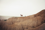 Side view of mountain goat standing on rock formation against sky - CAVF16738