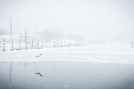 Bird flying over frozen lake during snowfall - CAVF17038