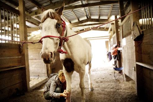 Woman bandaging leg of horse in stable - CAVF17221