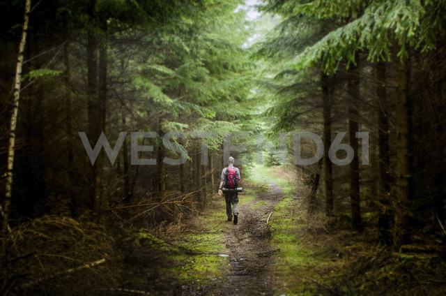 Rear view of male hiker hiking in forest - CAVF17371