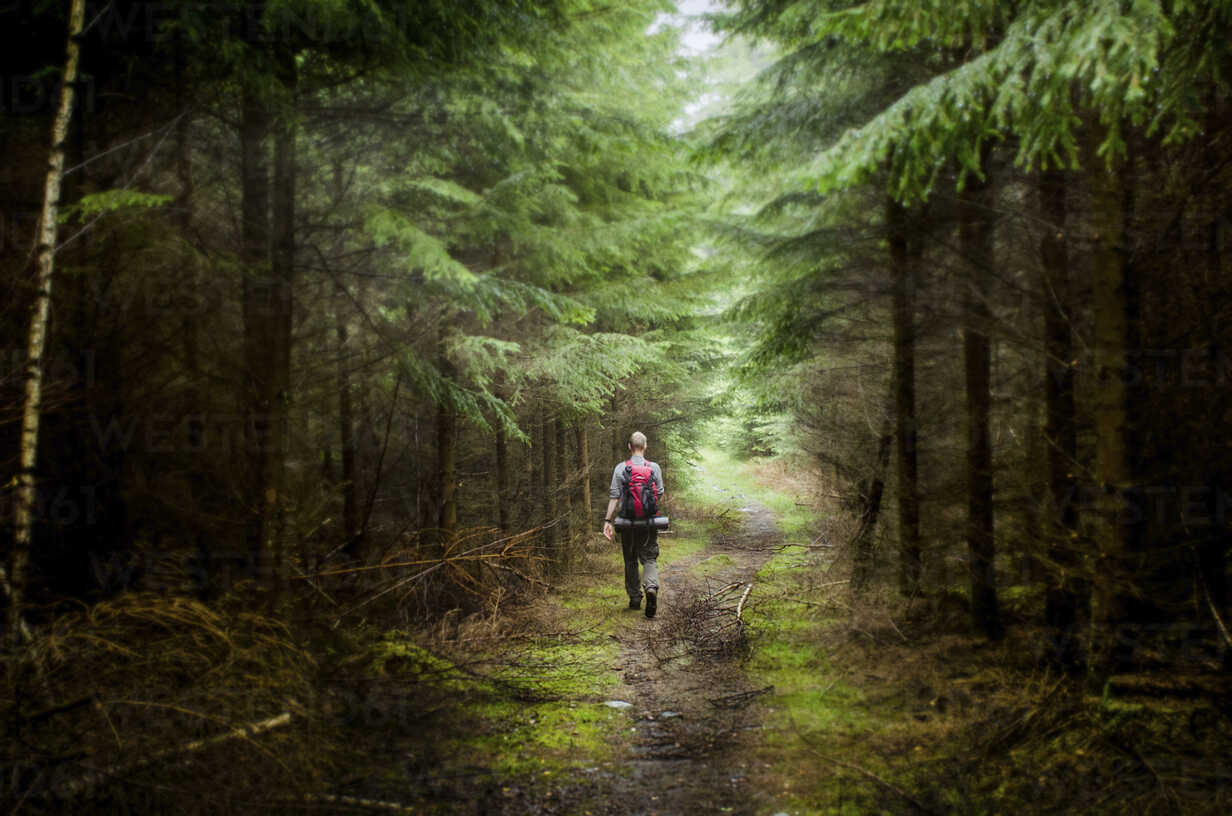 Rear view of male hiker hiking in forest - CAVF17371 - Cavan Images/Westend61