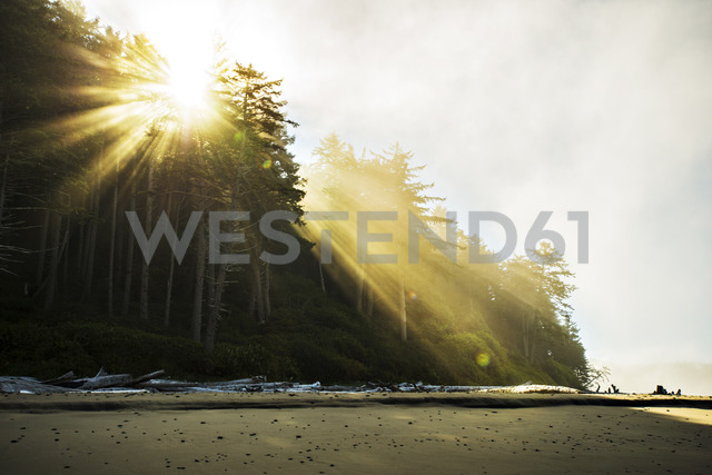 Low angle view of sunlight streaming through trees at beach - CAVF18219