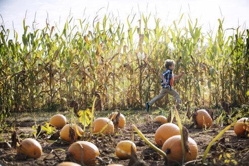 Boy running by pumpkins in farm - CAVF18942