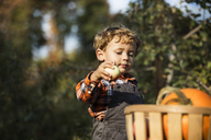Boy keeping fruit in basket at field - CAVF18957