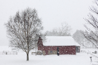 Bare trees and barn on snow covered land - CAVF19995