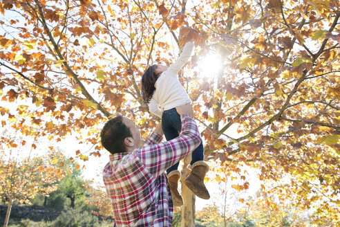 Low angle view of father lifting daughter for reaching towards maple leaves - CAVF20025