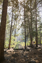 Tent at camp site in forest - CAVF20532