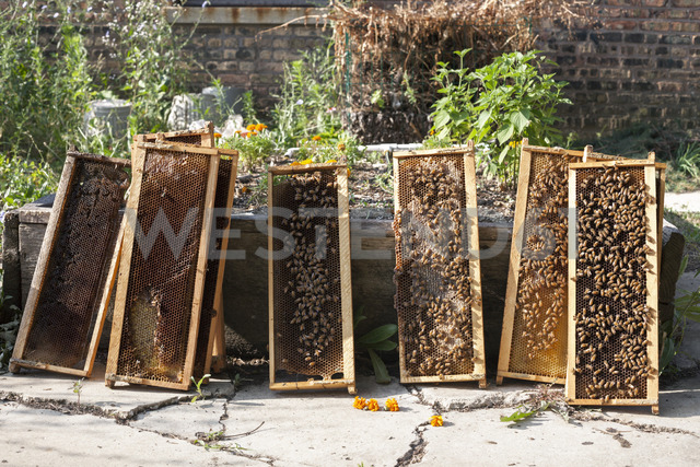 Bees on wooden frames against plants - CAVF20823 - Cavan Images/Westend61