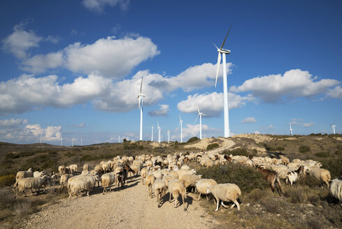 Windmills and Flock of sheep on wind farm against cloudy sky - CAVF22650