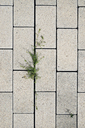 Overhead view of plant on concrete footpath - CAVF22665