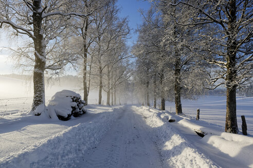 Germany, Bavaria, Geretsried, snowy forest track - LHF00547