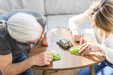Mature couple feeding tortoise at home - MOEF00978
