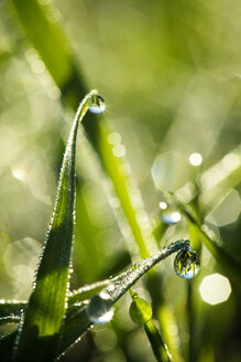 Close-up of water droplets on plants - CAVF24830