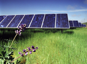 Flowers growing on solar panel field against blue sky - CAVF24974
