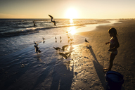 High angle view of girl looking at birds on beach during sunset - CAVF25049