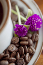 Close-up of globe amaranth flowers on roasted coffee beans in saucer - CAVF25151