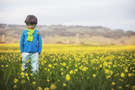 Boy standing on oilseed rape field - CAVF25970