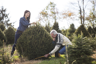 Man with granddaughter cutting pine tree in farm - CAVF26201