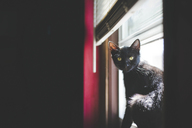 Portrait of black cat sitting by window at home - CAVF26387