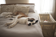 Saint Bernard lying on bed by baby sleeping in crib - CAVF26453