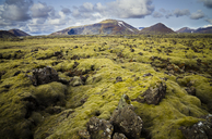 Iceland, South of Iceland, moss-grown volcanic rock - STCF00510