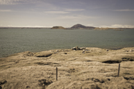 Iceland, sheep at Myvatn lake - STCF00540
