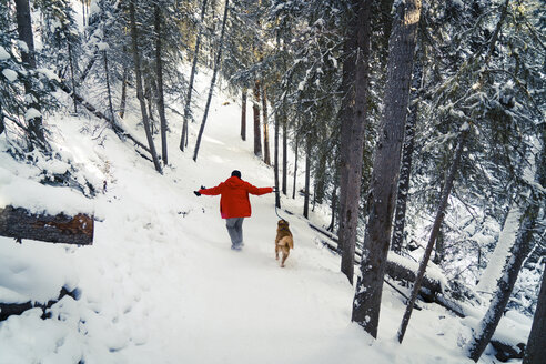 Rear view of man with Golden Retriever walking on snow covered field in forest - CAVF27314