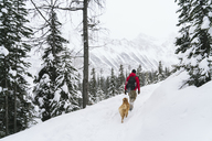Rear view of hiker with Golden Retriever walking snow covered field at forest - CAVF27326