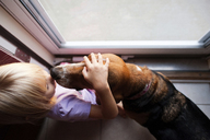 Overhead view of girl petting beagle while standing by window - CAVF28321