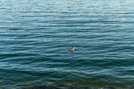High angle view of woman swimming in sea - CAVF28405