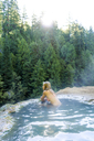 Woman wearing bikini looking away while relaxing in hot spring at forest - CAVF28426