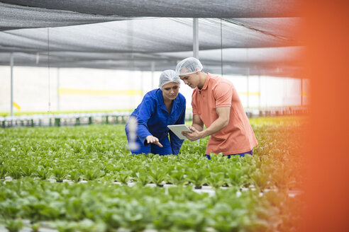 Greenhouse workers inspecting plants, using digital tablet - ZEF15196