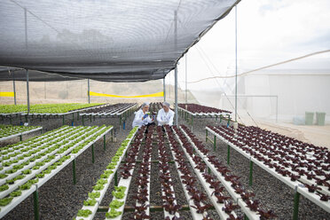 Greenhouse workers inspecting plants - ZEF15232