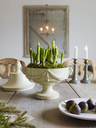 Elegant dining table with potted plant and figs - FOLF00393