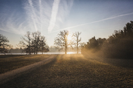 Germany, Brandenburg, Potsdam, park with trees in the morning light - ASCF00840