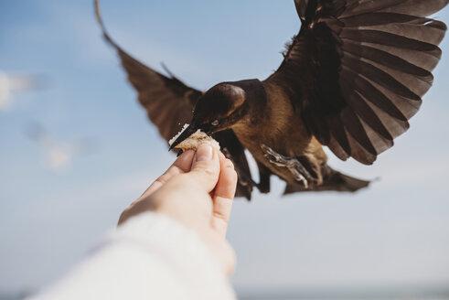 Cropped image of man feeding bird at beach - CAVF28735
