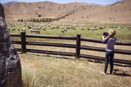 Rear view of girl photographing sheep through tablet computer while standing on field - CAVF29614