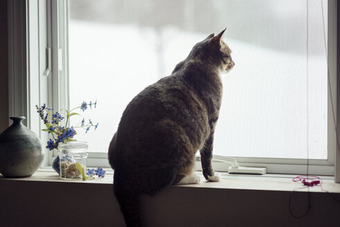 Cat sitting on window sill at home - CAVF30174