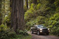 Pick-up truck on dirt road amidst forest at Redwood National and State Parks - CAVF30777