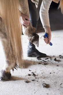 Young woman cleaning hooves of horse - FOLF03079