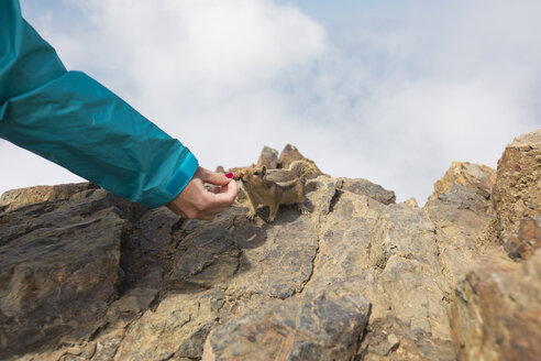 Cropped hand of female hiker feeding squirrel on rock against clouds - CAVF30914