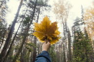 Cropped image of woman holding autumn leaves against trees in forest - CAVF31091