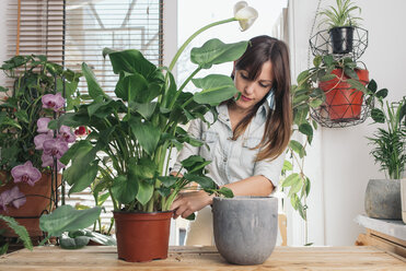 Woman caring for a peace lily - SKCF00355