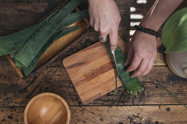 Woman cutting the pods of an aloe vera - SKCF00361