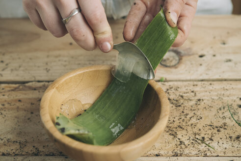 Close-up of woman removing the pulp of the pods of an aloe vera with a spoon - SKCF00364